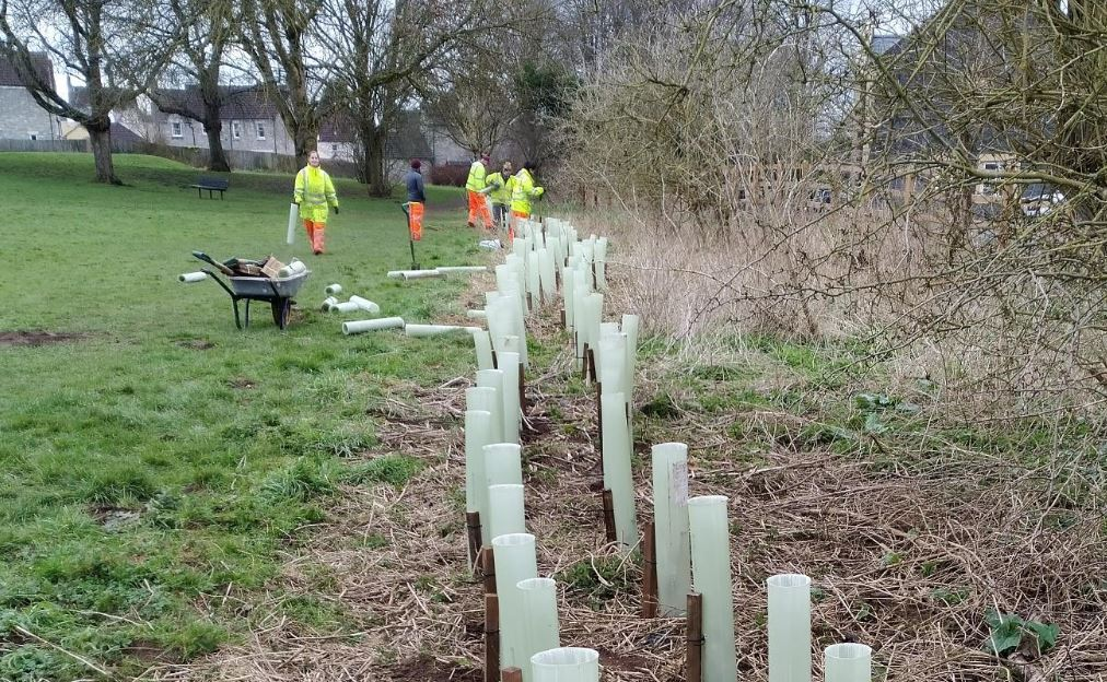 Network Rail tree planting