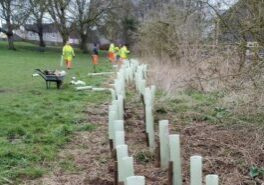 Network Rail tree planting
